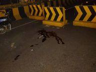 जबलपुर से मैहर जाते समय रास्ते में बाइक की टक्कर से हुआ घायल, अस्पताल पहुंचने से पहले तोड़ा दम|जबलपुर,Jabalpur - Money Bhaskar