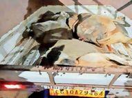 चालक ने हाइवा से पांच गायों को कुचला, दो की मौत, तीन घायल बिलासपुर,Bilaspur - Money Bhaskar