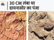 7 साल पहले 20 साइंटिस्ट ने जैसलमेर की पहाड़ियों पर खोजा था 15 करोड़ साल पुराना फुट प्रिंट, 1 महीने पहले कोई ले गया|देश,National - Money Bhaskar