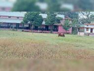 50% बच्चों को बुलाया, वे भी नहीं आए, पालकों को फोन कर कहा-स्कूल भेजो|बैतूल,Betul - Money Bhaskar