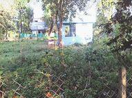 सरकारी कॉलोनियों में मूलभूत सुविधाओं के लिए तरस रहे कर्मचारी, सरकारी काॅलोनियों में उगी घास, सफाई, पानी निकासी भी नहीं|होशंगाबाद,Hoshangabad - Money Bhaskar