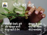 पेड़ों को प्यार की झप्पी देकर हो रहा दिव्यांगों का इलाज|हेल्थ एंड फिटनेस,Health & Fitness - Money Bhaskar