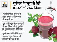 खास तरह का चुकंदर जूस पीते ही ढेर हो जाएंगे मच्छर, मलेरिया रोकने के लिए स्वीडन के वैज्ञानिकों का अनोखा प्रयोग लाइफ & साइंस,Happy Life - Money Bhaskar