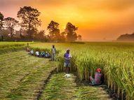 युवाओं का रुझान अलग, अब सब्जियों, फूलों व फलों तथा कपास में भी हमारा नाम|रायपुर,Raipur - Money Bhaskar