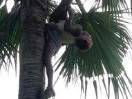 ताड़ के पेड़ पर चढ़ा व्यक्ति झुलसा, बगल से गुजर रही थी तार, मौके पर ही हुई मौत भोजपुर,Bhojpur - Money Bhaskar