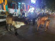 IAS-PCS का सपना देखने वाले संदीप की वाराणसी में सांड़ ने ले ली जान, छोटे भाई की पहले ही हुई थी मौत|वाराणसी,Varanasi - Money Bhaskar