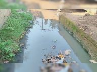 क्षेत्र में सफाई नहीं होने के कारण नाले का बहाव रुका, पनप रहे हैं मच्छर बड़वानी,Barwani - Money Bhaskar
