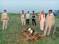 श्वान के झुंड के हमले में काले हिरण की मौत, पीएम में दांतों के निशान मिले|सागर,Sagar - Money Bhaskar
