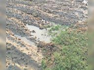 बारिश से 18 हजार हैक्टे. में अंकुरित सरसों को फायदा, चिकनी मिट्टी वाले 27 हजार हैक्टे. में सरसों बीज खराब होने की आशंका|टोंक,Tonk - Money Bhaskar