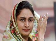 पति सुखबीर बादल से मिलाएंगी कदमताल; महिला वोटरों से मिलेंगी, उत्तरी और दक्षिण हलकों में करेंगी जनसभाएं|जालंधर,Jalandhar - Money Bhaskar