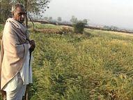बेमौसमी बारिश से कई जिलों में नष्ट हो गई हैं खरीफ की फसलें, मुआवजा देने की तैयारी|जयपुर,Jaipur - Money Bhaskar