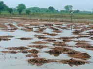 कांग्रेस विधायक बोले- कलेक्टर को नहीं है खेती का ज्ञान, भाजपा ने कांग्रेस को बताया जबरदस्ती वाला हितैषी|दतिया,Datiya - Money Bhaskar