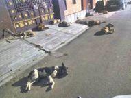 हत्या की दोषी नगर परिषद श्रीगंगानगर,Sriganganagar - Money Bhaskar