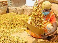 डाळ आणि तेलानंतर आता हळद स्वयंपाकाची चव बिघडवणार, भाव सर्वात उच्च पातळीवर|बिझनेस,Business - Divya Marathi