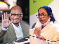 राष्ट्रवादीचे सर्वेसर्वा शरद पवारांकडून ममता बॅनर्जींना शुभेच्छा, पश्चिम बंगालमध्ये तृणमूलचा विजय जवळपास निश्चित|मुंबई,Mumbai - Divya Marathi