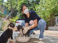 जॅकलीन फर्नांडीसने केली मुक्या प्राण्यांची मदत, भटक्या जनावरांपर्यंत पोहोचवले अन्न|बॉलिवूड,Bollywood - Divya Marathi