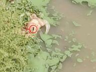 टॉप एक्स्पर्ट म्हणाले- पाण्यातून विषाणू शरीरात जाण्याचे पुरावे नाहीत, इतर आजार होऊ शकतात|देश,National - Divya Marathi