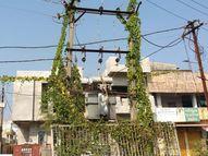 વીજ ટ્રાન્સફોર્મર ઉપર ઊગી નીકળેલા વેલાઓ, છોટાઉદેપુરમાં લાગેલા વીજ થાંભલાઓ પાસે વેલાઓ ઉગી નીકળતા કરંટ લાગવાનો ભય છોટા ઉદેપુર,Chhota Udaipur - Gujarati News