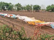 માસ્ક એ જ વેક્સિન, ખેતરમાં રહેલા શાકભાજી અને તૈયાર પાકની રક્ષા પણ 'માસ્ક'ના સહારે!|મોરબી,Morbi - Gujarati News