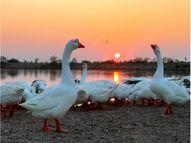 લાઠીના દુધાળા સરોવર કાંઠે રમણીય નજારો|અમરેલી,Amreli - Gujarati News