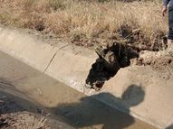 જારૂષા માઇનોર કેનાલમાં ત્રણ ફૂટનું ગાબડું પડતાં ખેતરો બેટમાં ફેરવાયા, વારંવાર તૂટતી કેનાલોથી પરેશાન ખેડૂતોએ નર્મદા નિગમ સામે રોષ|પાટણ,Patan - Gujarati News