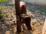 નડિયાદમાં લઘુભાઇના છીંડા વિસ્તારમાં ગાયે તોફાન મચાવ્યું|નડિયાદ,Nadiad - Gujarati News