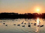 રવેચી ધામ ...બતક તળાવ....|ભાવનગર,Bhavnagar - Gujarati News