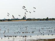 નળ સરોવરમાં પાણીનું પ્રમાણ વધતા વિદેશી પક્ષીઓનું વડલા ગામ તરફ સ્થળાંતર|અમદાવાદ,Ahmedabad - Gujarati News