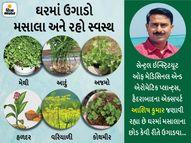 આદુંં શરદી-ઉધરસથી બચાવશે અને અજમો હરસથી રાહત અપાવશે, ઘરે મસાલાના છોડ ઉગાડવાની પદ્ધતિ જાણો|હેલ્થ,Health - Divya Bhaskar