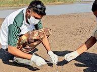 બર્ડ ફ્લૂની આશંકાએ 150 પક્ષીના નમુના લેવાયા અમરેલી,Amreli - Divya Bhaskar