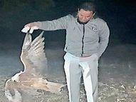 કોસમડીમાં બાઝ પક્ષીનું શંકાસ્પદ મોત પોલ્ટ્રી ફાર્મ સહીતના સ્થળો પર ચેકિંગ|અંકલેશ્વર,Ankleshwar - Divya Bhaskar