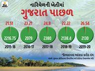 1600 કિલોમીટરનો દરિયાકિનારો હોવા છતાં નારિયેળના ઉત્પાદનમાં ગુજરાત પાણી વગરનું, દેશના કુલ પ્રોડક્શનમાં માત્ર 1% હિસ્સો બિઝનેસ,Business - Divya Bhaskar