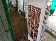 કેવડિયા જંગલ સફરીમાં પ્રાણીઓ માટેે AC મુકાયા કેવડિયા,Kevadia - Divya Bhaskar