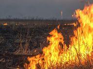 સેણાદરીયા ગોરાડા ગામે ઘઉંના ખેતરમાં આગ લાગી|લુણાવાડા,Lunavada - Divya Bhaskar