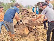 કડોદરામાં સ્મશાનમાં સૂકા લાકડા ખૂટ્યા, સંચાલકે લોક અપીલ કરી પલસાણા,Palsana - Divya Bhaskar