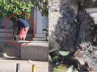 રાજકોટના સંત કબીર રોડ પરના વૃક્ષમાં એક વ્યક્તિ છેલ્લા ત્રણ દિવસથી એસિડ નાખે છે, ગાર્ડન શાખાએ પોલીસ ફરિયાદ કરવામાં આવી રાજકોટ,Rajkot - Divya Bhaskar