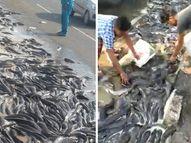 જબલપુર હાઇવે પર ટ્રક પલટી ખાતાં તેમા ભરેલી માછલીઓ ઢોળાઈ ગઈ, લોકો થેલામાં ભરીને લૂંટી ગયા ઈન્ડિયા,National - Divya Bhaskar