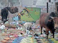 85 में से 78 वार्डों में गीला-सूखा कूड़ा लेने का आधा-अधूरा इंतजाम, स्वच्छता ऐप का रोज मात्र 12 लोग कर रहे इस्तेमाल|अमृतसर,Amritsar - Dainik Bhaskar