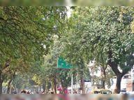 शहर में कई साल से मुख्य मार्ग के पेड़ों की नहीं हुई छंटाई|मोहाली,Mohali - Dainik Bhaskar