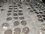 प्रशिक्षण के बाद मंडल कारा में महिला बंदियों ने की मशरूम की खेती, जेल में लहलहा रहे पौधे समस्तीपुर,Samastipur - Dainik Bhaskar