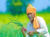 1400 किसानाें का 50 हजार रुपए तक का कर्ज हाेगा माफ, फरवरी से लिए जाएंगे कृषि ऋण माफी याेजना का आवेदन|धनबाद,Dhanbad - Dainik Bhaskar