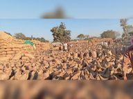 धान का उठाव नहीं होने से दो केंद्रों में खरीदी बंद|महासमुंद,Mahasamund - Dainik Bhaskar
