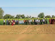 बेड़वा में सरसों पर प्रक्षेत्र दिवस मनाया|नागौर,Nagaur - Dainik Bhaskar