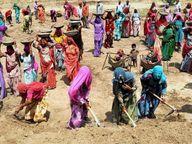 मनरेगा में हर दिन काम कर रहे चार लाख मजदूर, अब तक कुल 11 लाख 78 हजार 995 नये परिवरों को जॉबकार्ड दिया गया|रांची,Ranchi - Dainik Bhaskar