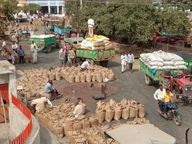 इस सप्ताह सिर्फ 3 दिन खुलेगी मंडी, किसानों की भीड़ बढ़ेगी|सागर,Sagar - Dainik Bhaskar