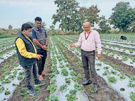 स्ट्राबेरी, ब्रोकली से लेकर मशरूम लगाकर लाखों कमा रहे किसान|सागर,Sagar - Dainik Bhaskar