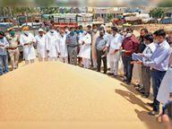 पहले दिन 1000 एमटी गेहूं की हुई सरकारी खरीद 200 एमटी व्यापारियों ने खरीदा, आज से उठाव शुरू|श्रीगंंगानगर,Sriganganagar - Dainik Bhaskar