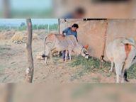 काेराेना में बढ़ा तनाव और बीपी, गाय, मिट्ठू, लव बर्ड्स, एक्वेरियम में फिश पालकर कर रहे देखभाल, फ्री समय अच्छा बीतता, स्ट्रेस होता कम होशंगाबाद,Hoshangabad - Dainik Bhaskar