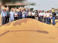 सनौर की मंडी में गेहूं की खरीद प्रक्रिया शुरू|पटियाला,Patiala - Dainik Bhaskar