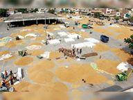 मंडियों में गेहूं की आवक हुई तेज पर जिले में बारदाने की भारी किल्लत|बठिंडा,Bathinda - Dainik Bhaskar